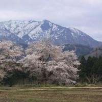 4/20花と温泉…春の味!