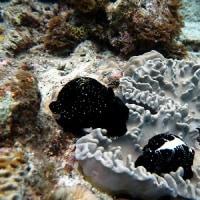 水温上がってる。沖縄ダイビング 那覇シーマリン