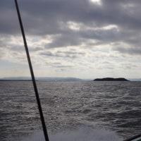 今年2度目の湾フグ釣り