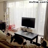 猫のいるシェアハウス@ひばりヶ丘 空室予定!