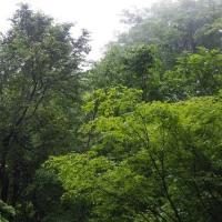 新緑、白鷹山