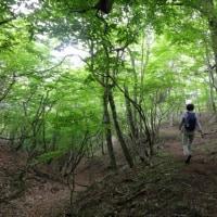 富士山山麓ウォーク6-4