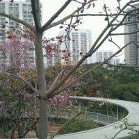 The Spring of Hong Kong
