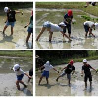 貫小学校の田植え体験教室