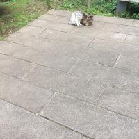 猫三昧 Cat-loving - 外猫 : 猛省 reflect on