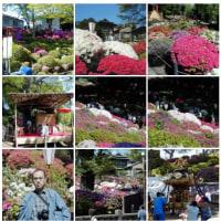 20000429つつじ根津神社。季節はつつじに代わりました。
