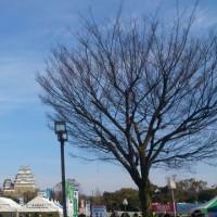【姫路城マラソン】【ラディ】【ライブレポ】