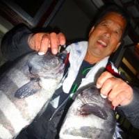 先週末.濁りの入った海だったが、釣果に恵まれ無かった..メジナ三昧、アオリは大型数少なく、石鯛釣りは好調、