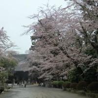 桜チーズケーキ @三井寺