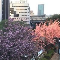 卯月の東京  友達との桜