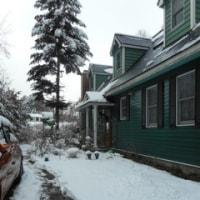 今朝の積雪10センチ~午後からは積雪0センチ~春の雪はすぐに解けて~雪の下から緑の芽が~