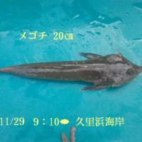 笑転爺の釣行記 11月29日☁☀ 久里浜・長瀬