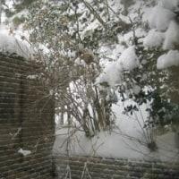 雪の宇奈月