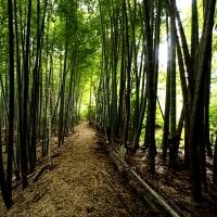 『竹林歩いてみました』他