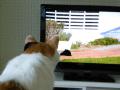 猫界で視聴率100%?