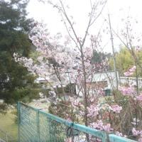 遅くなった春