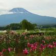 梅雨明けしたと言う、富士