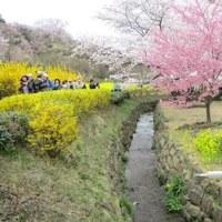 福島の花見山に感動しました。