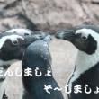 ペンギン相談中?