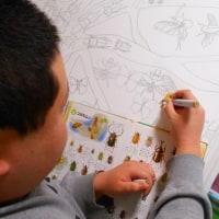 今日は昆虫描いてます。