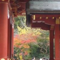 秋の鎌倉散歩♪「鶴岡八幡宮」、(2016秋)。