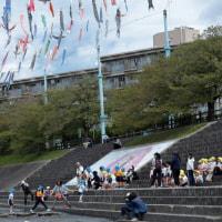 高槻 芥川桜堤公園の鯉のぼり
