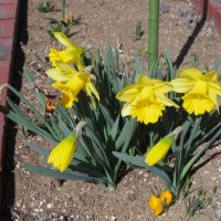春はもうすぐ?