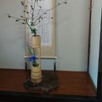 A Japanese wisteria