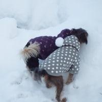 雪に埋もれてきました。