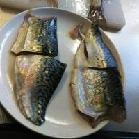 5回目の釣り(4月23日)