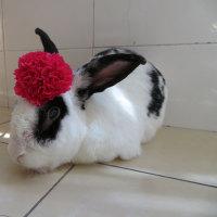 花とウサギ