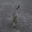 外面が良い猫