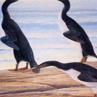 NZで発見の化石で、古代の巨大ペンギン、恐竜と共存。
