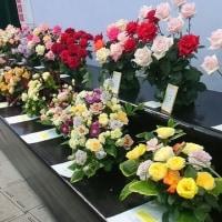 「国際バラとガーデニングショウ2017」の薔薇たち