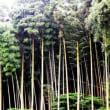大雨災害と植林。