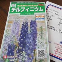 花壇 花の入れ替え前 2017.6.24