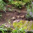 ラベンダーとスズメたち