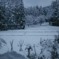 やっと里に積雪