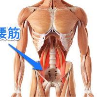 お腹が硬くて大腰筋が触診出来ない。    金沢市   慢性腰痛専門    整体院   樹
