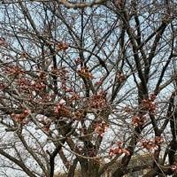 桜を待ちながらの読書     麗