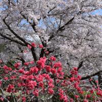 茶臼山 【標高729.9m】・・・4月23日