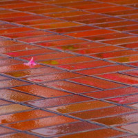 25日の雨 大津市