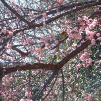 春を味わう
