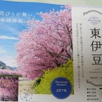 明後日は大寒! 大寒から節分 恵方巻、 早春は河津桜!