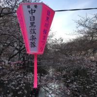 本日の桜状況一覧‥。