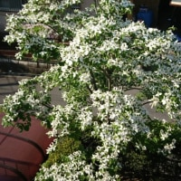 庭の花ばな