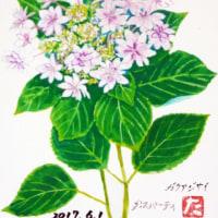 6月の絵手紙『額紫陽花(ダンスパーティ)』を届けます