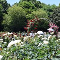 庄内緑地公園。