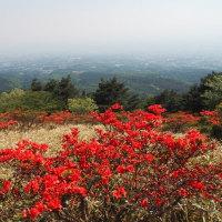 赤城山 / 前橋市 - 鍋割高原 - 早咲きのヤマツツジ