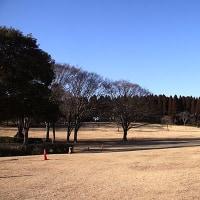 散歩写真 昭和の森-大網(2017/2/12)(1)